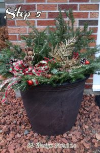Festive Outdoor Plants